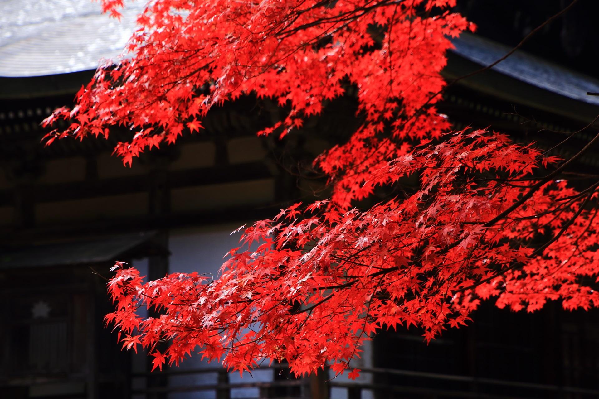 五大堂を染める風情ある紅葉