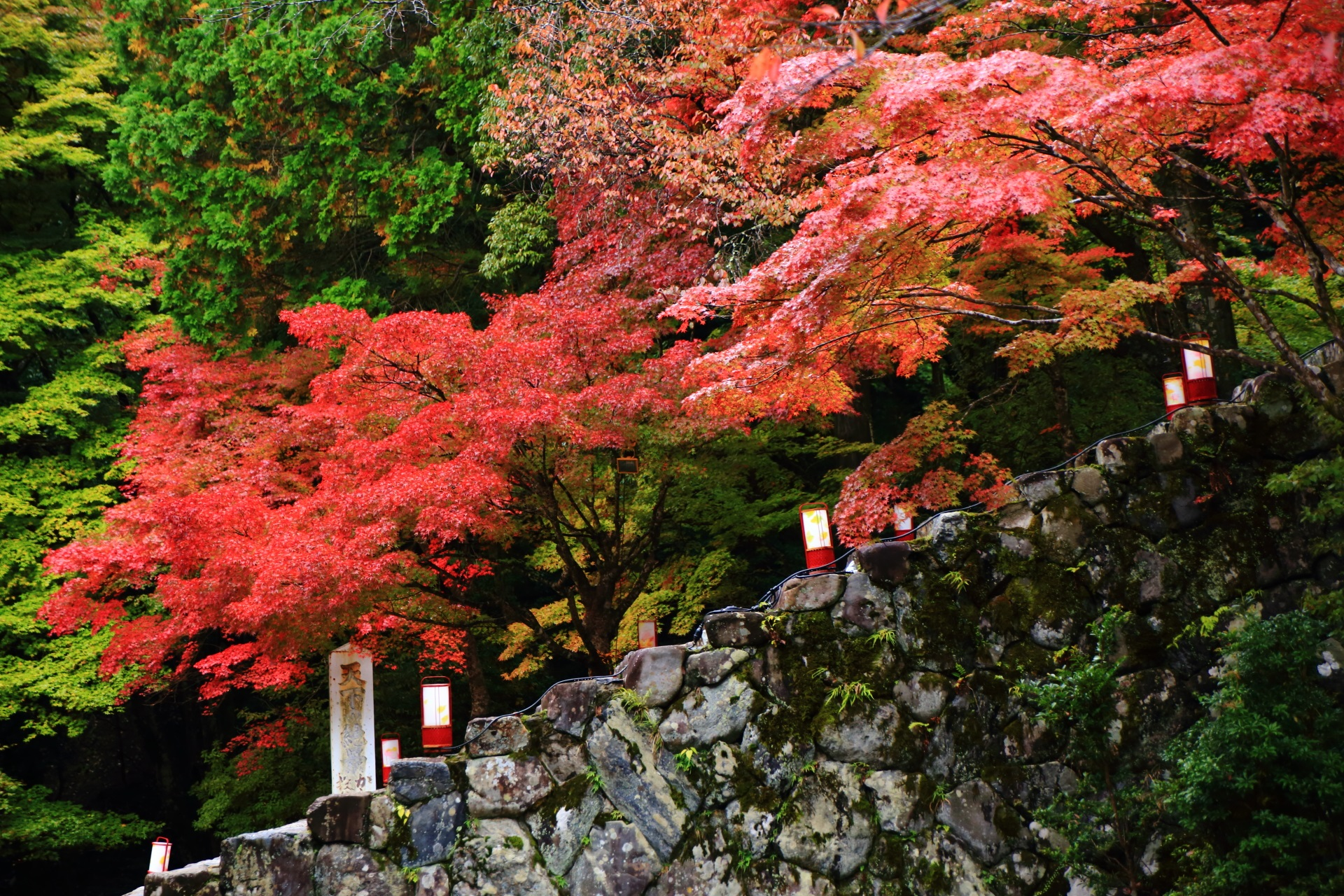 Kyoto Jingoji-Temple autumn leaves