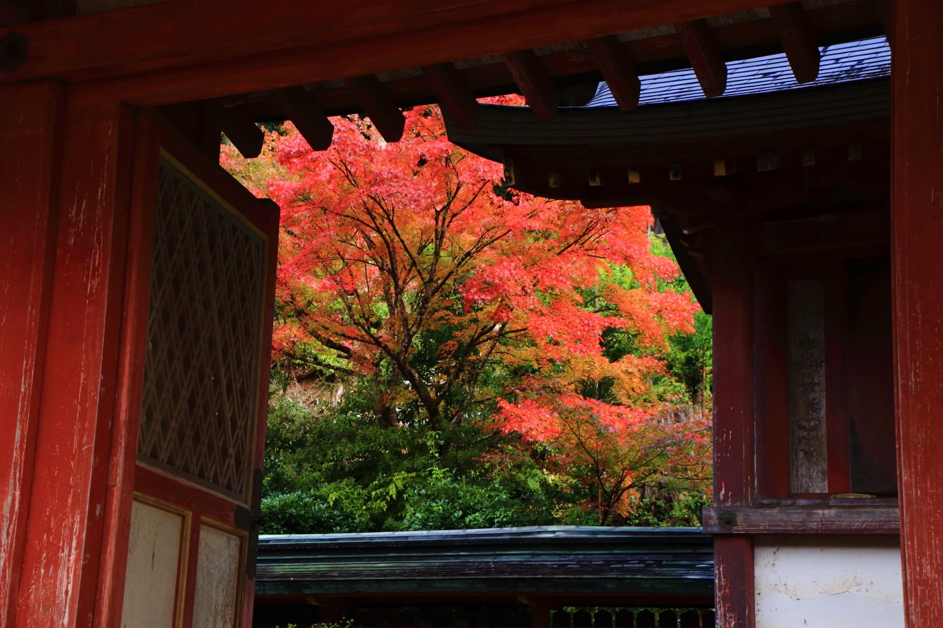 和気清麻呂公霊廟の門の間からのぞく爽やかな朱色の紅葉