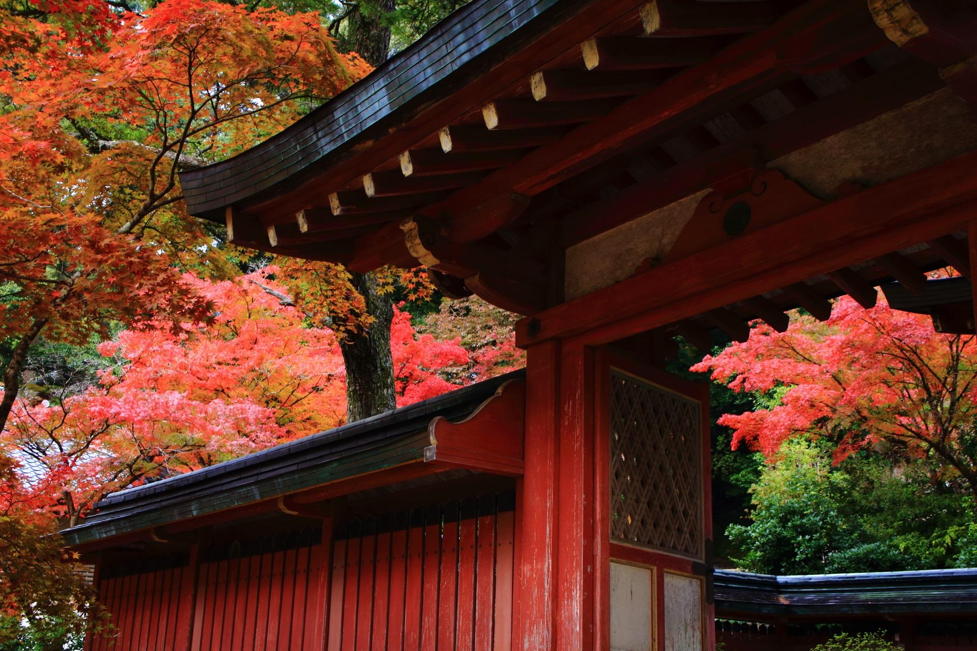 神護寺の和気清麻呂公霊廟の上品な建物を華やぐ艶やかな秋色
