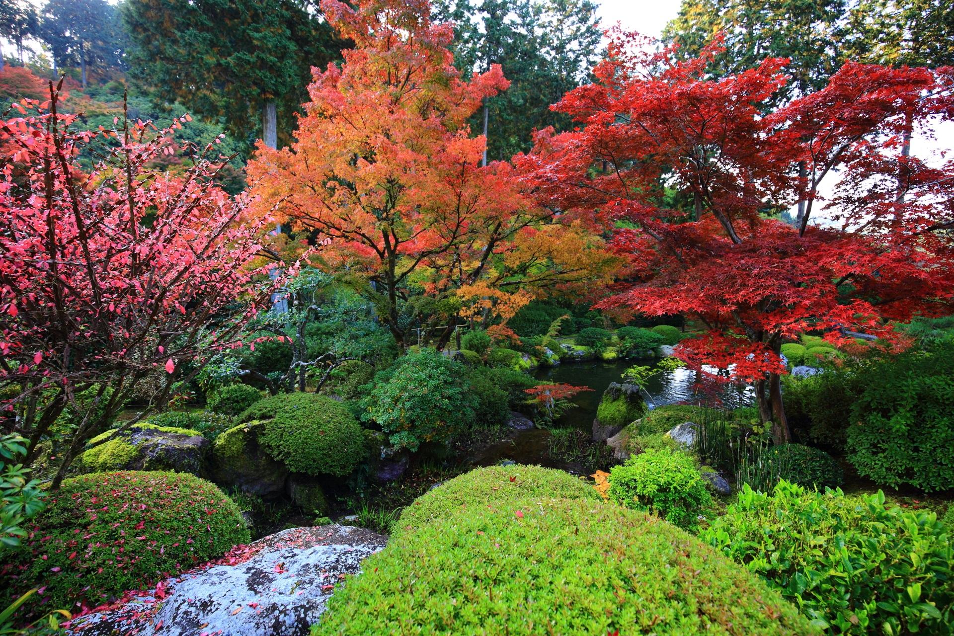 色とりどりの秋につつまれる三室戸寺の池泉式庭園