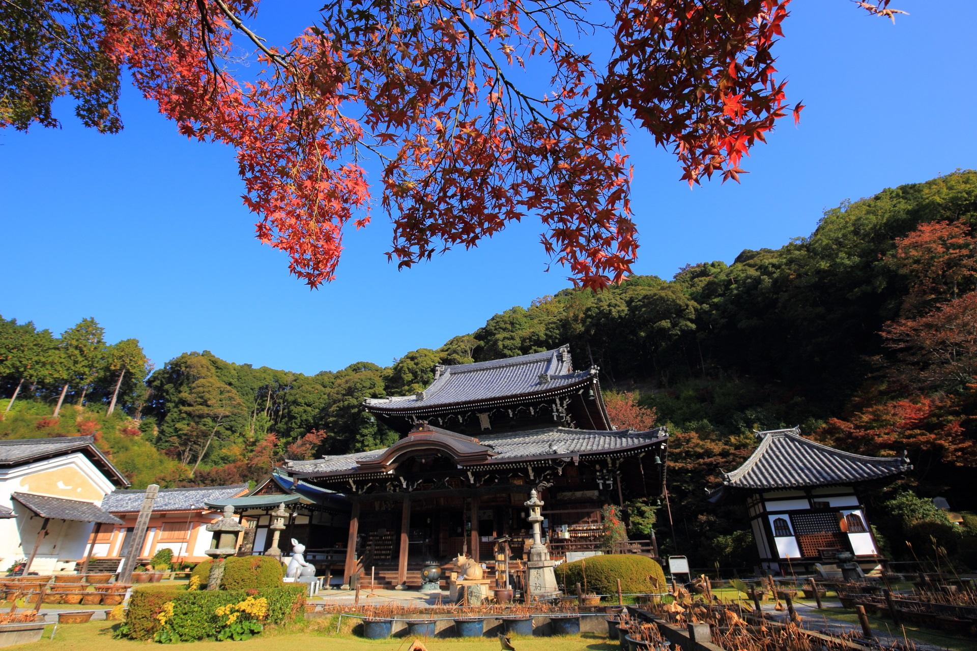 三室戸寺の本堂と鮮やかな紅葉