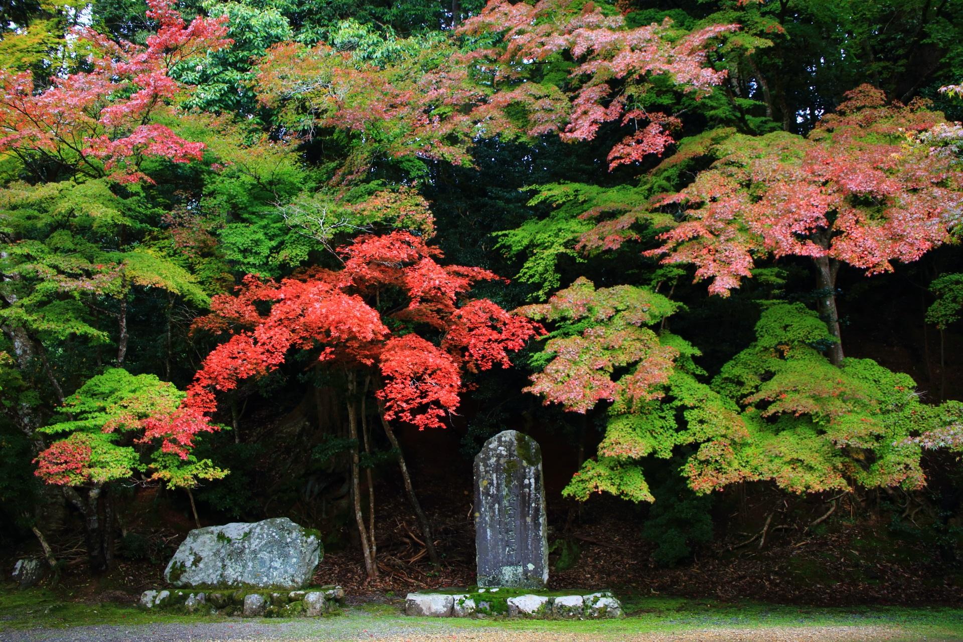 神護寺の能村登四郎句碑付近の紅葉