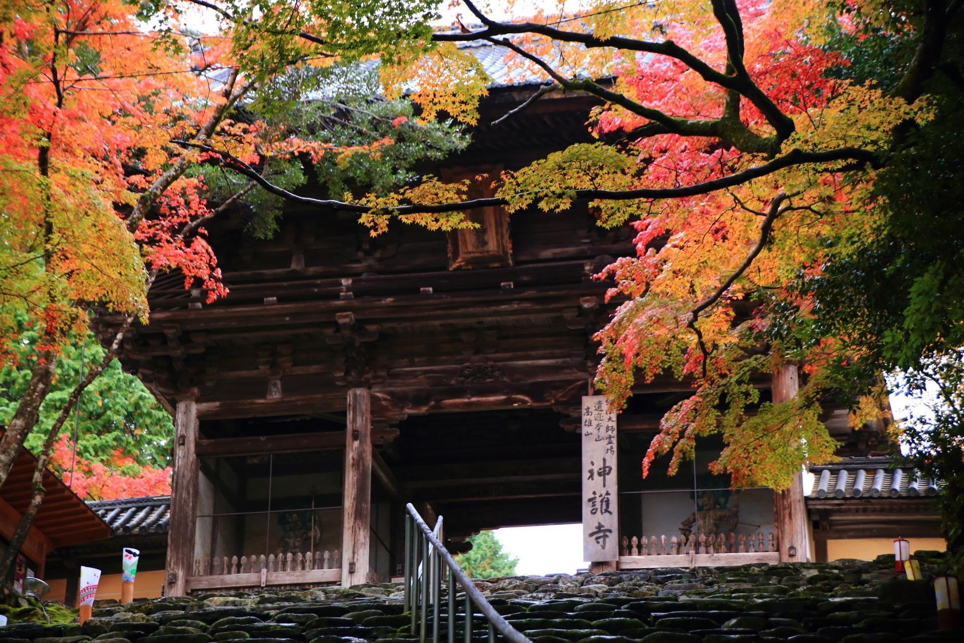 神護寺の楼門と降り注ぐ紅葉