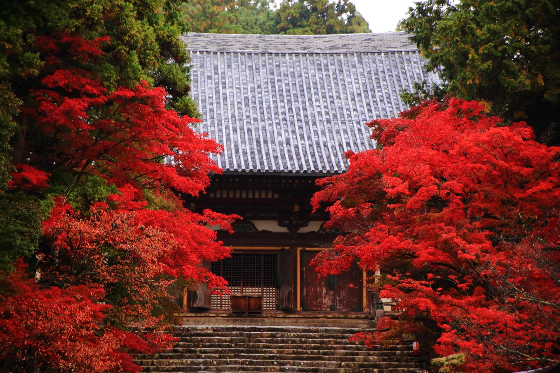 神護寺の金堂と燃え上がるような真っ赤な紅葉