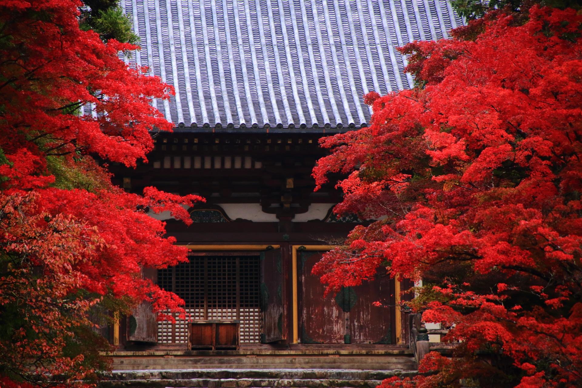 神護寺の雄大な金堂を染める鮮やかな紅葉