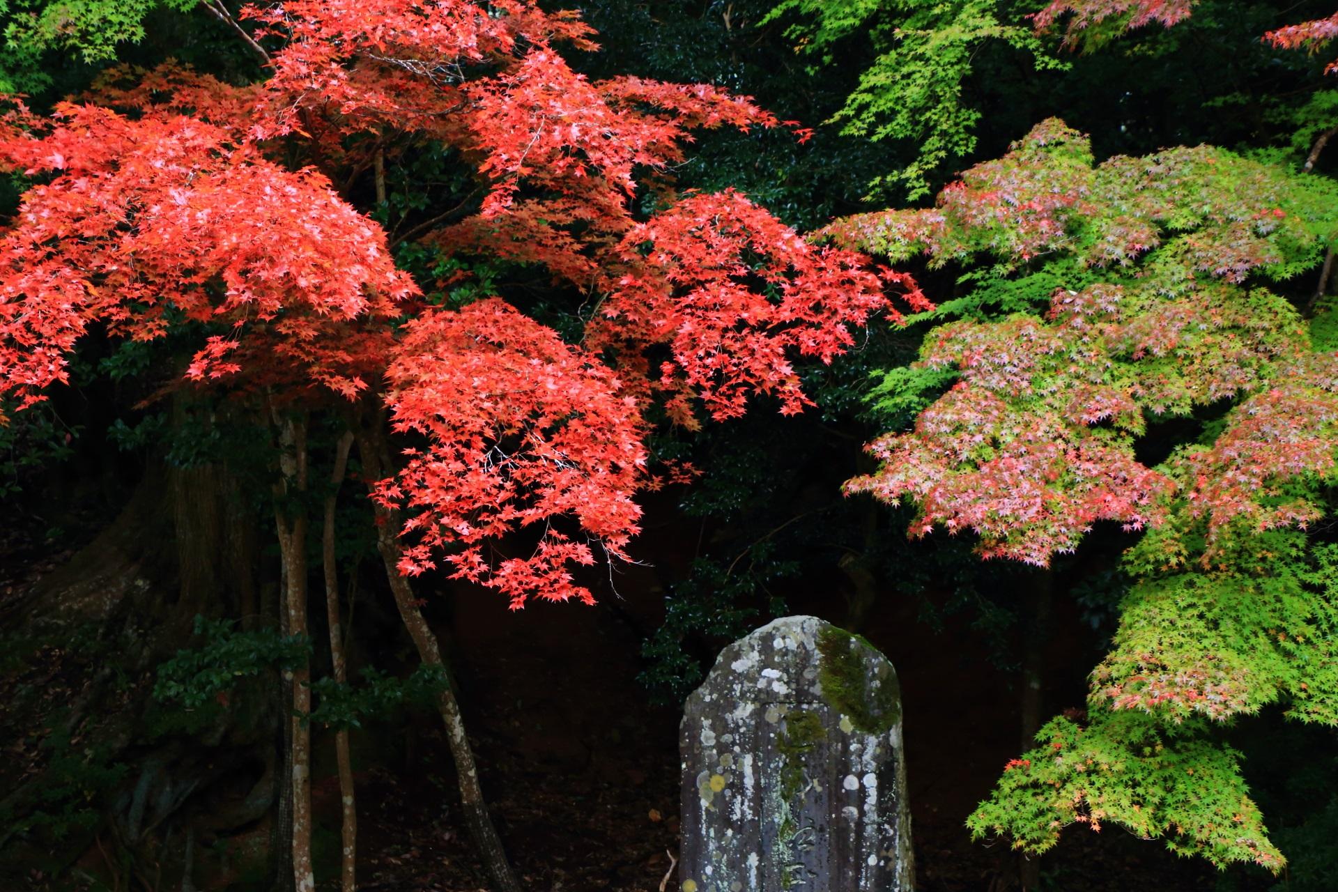 青葉と紅葉の見事なコントラスト