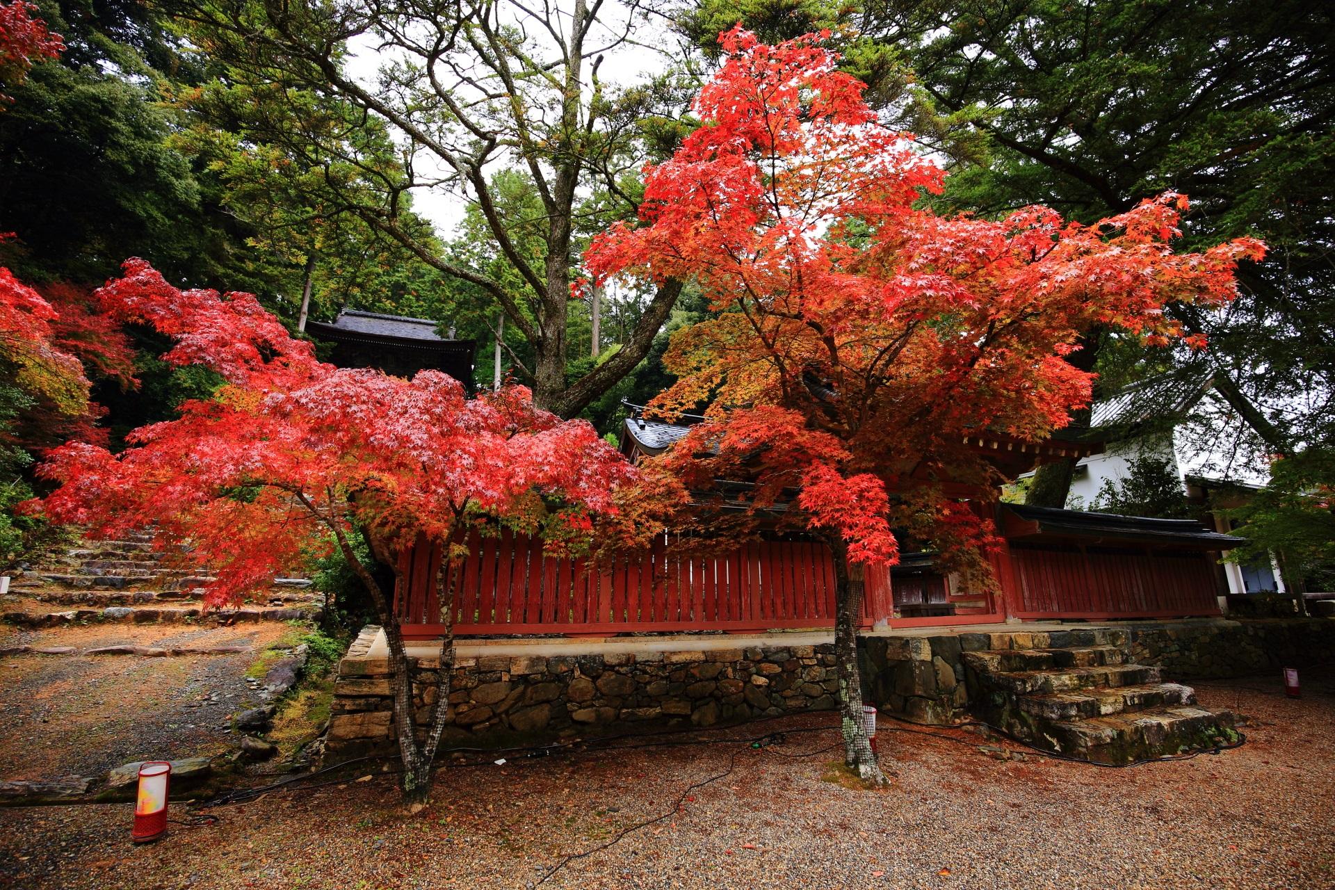 優雅に枝を伸ばす和気清麻呂公霊廟のもみじ