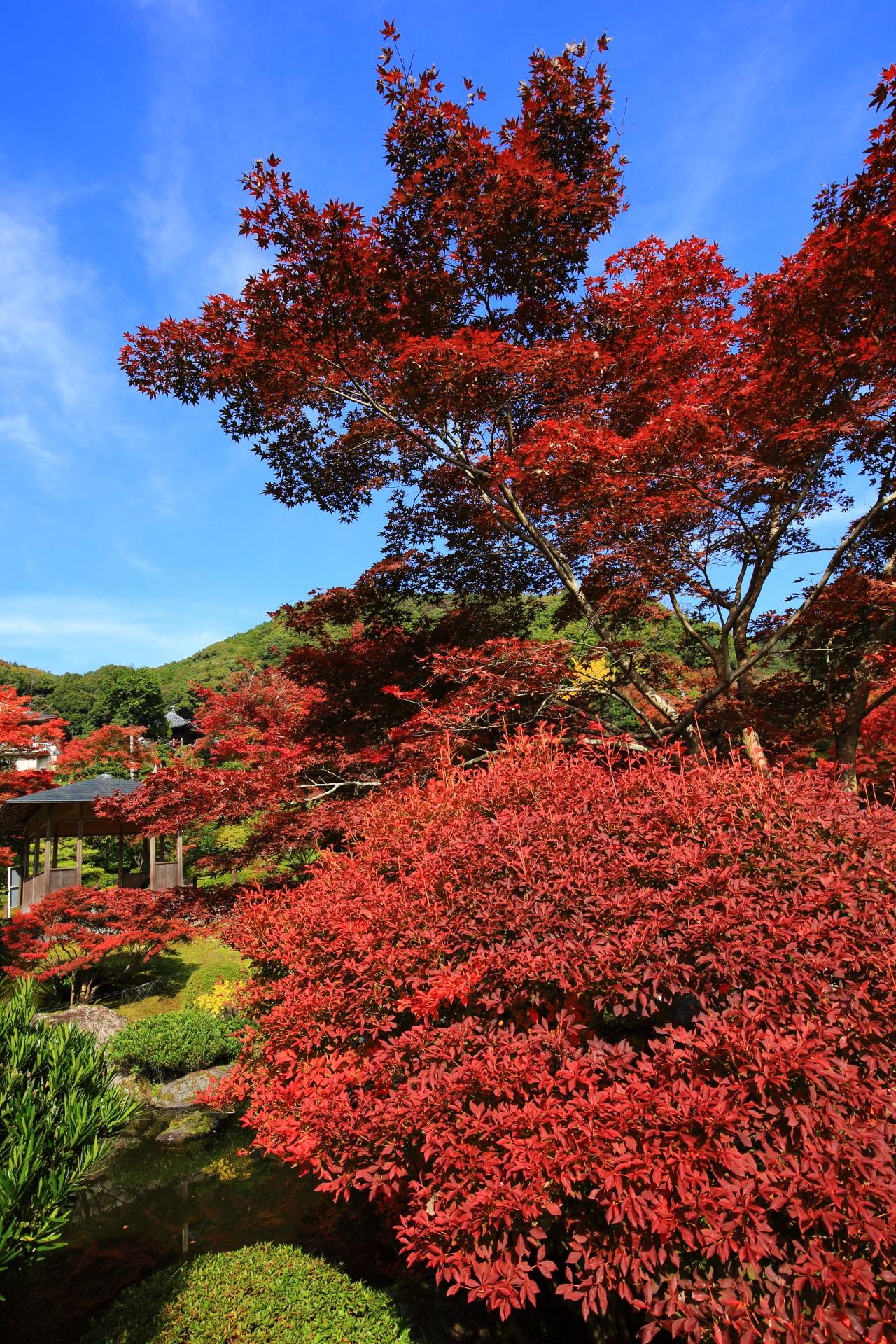 三室戸寺の与楽苑の紅葉