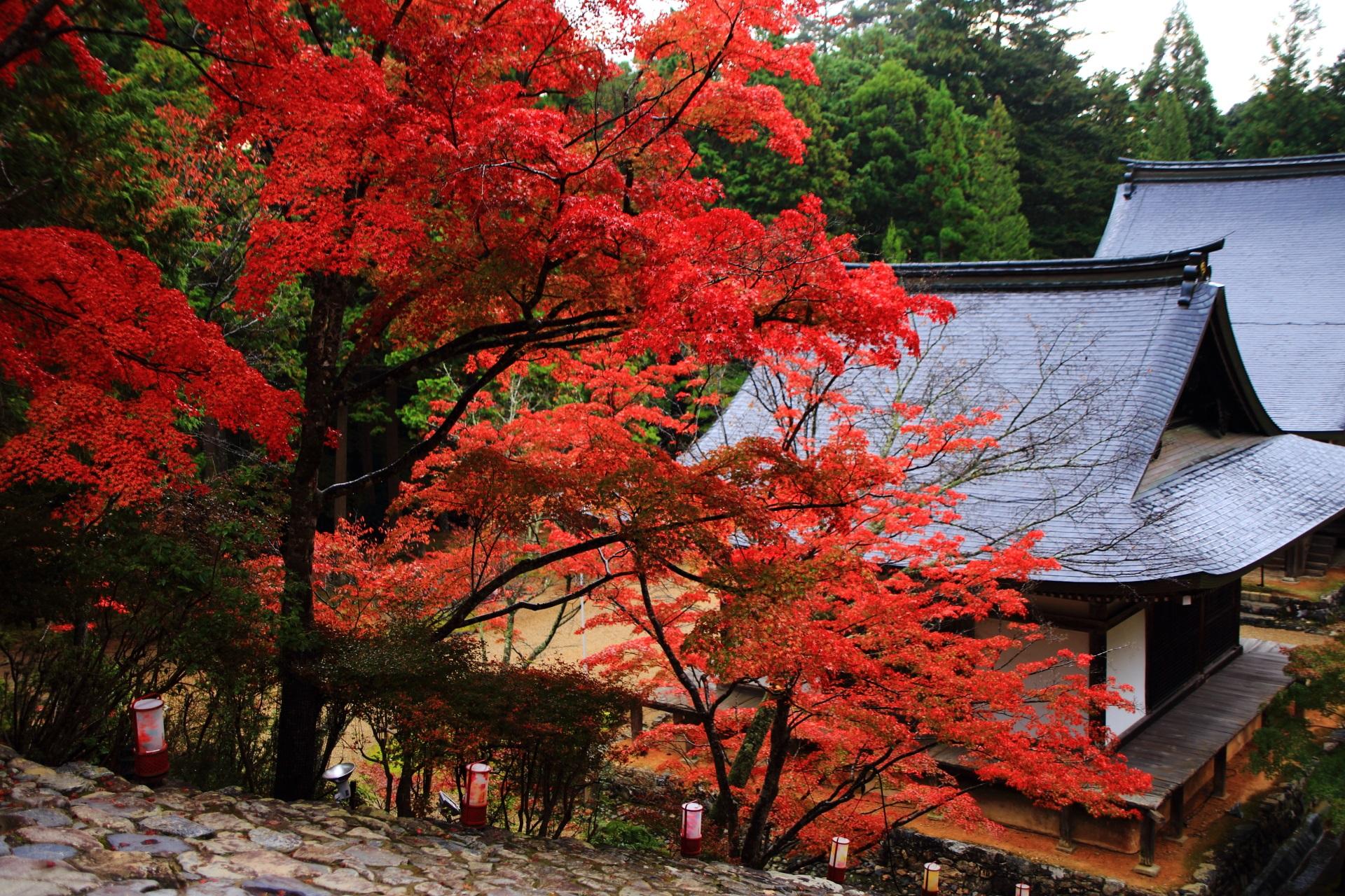 艶やかな紅葉に染まる秋の神護寺