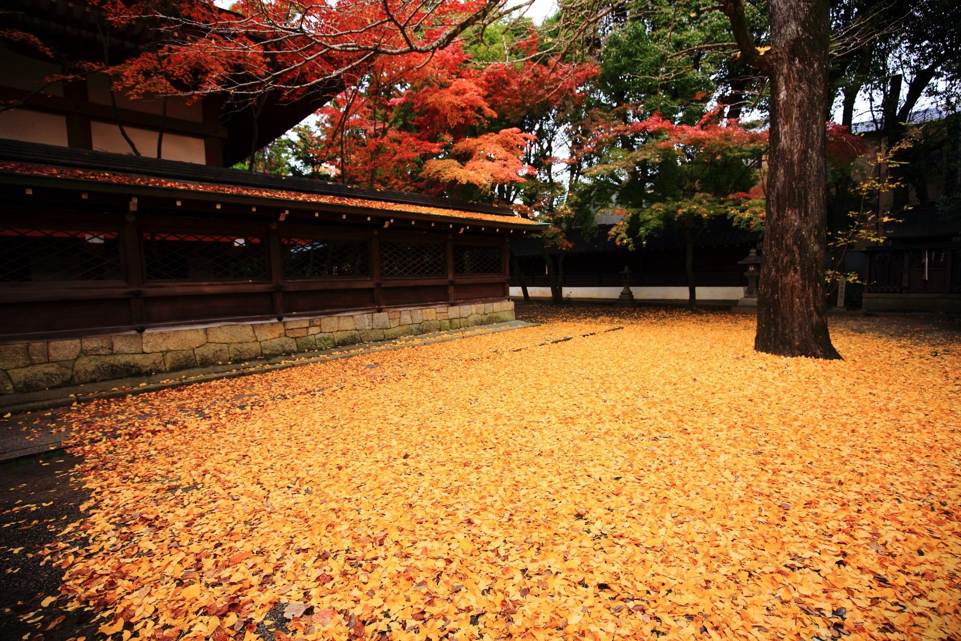 紅葉と散り銀杏の隠れた名所