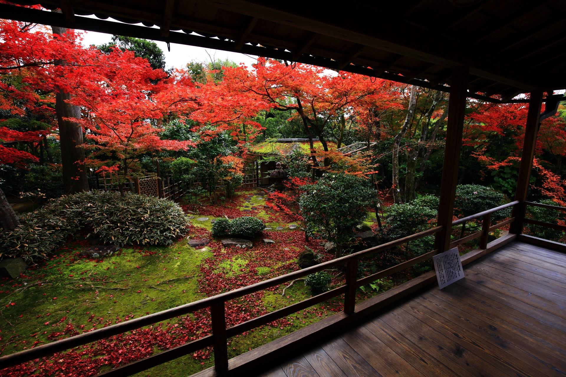 客殿を囲むように広がる秋につつまれた露地庭園