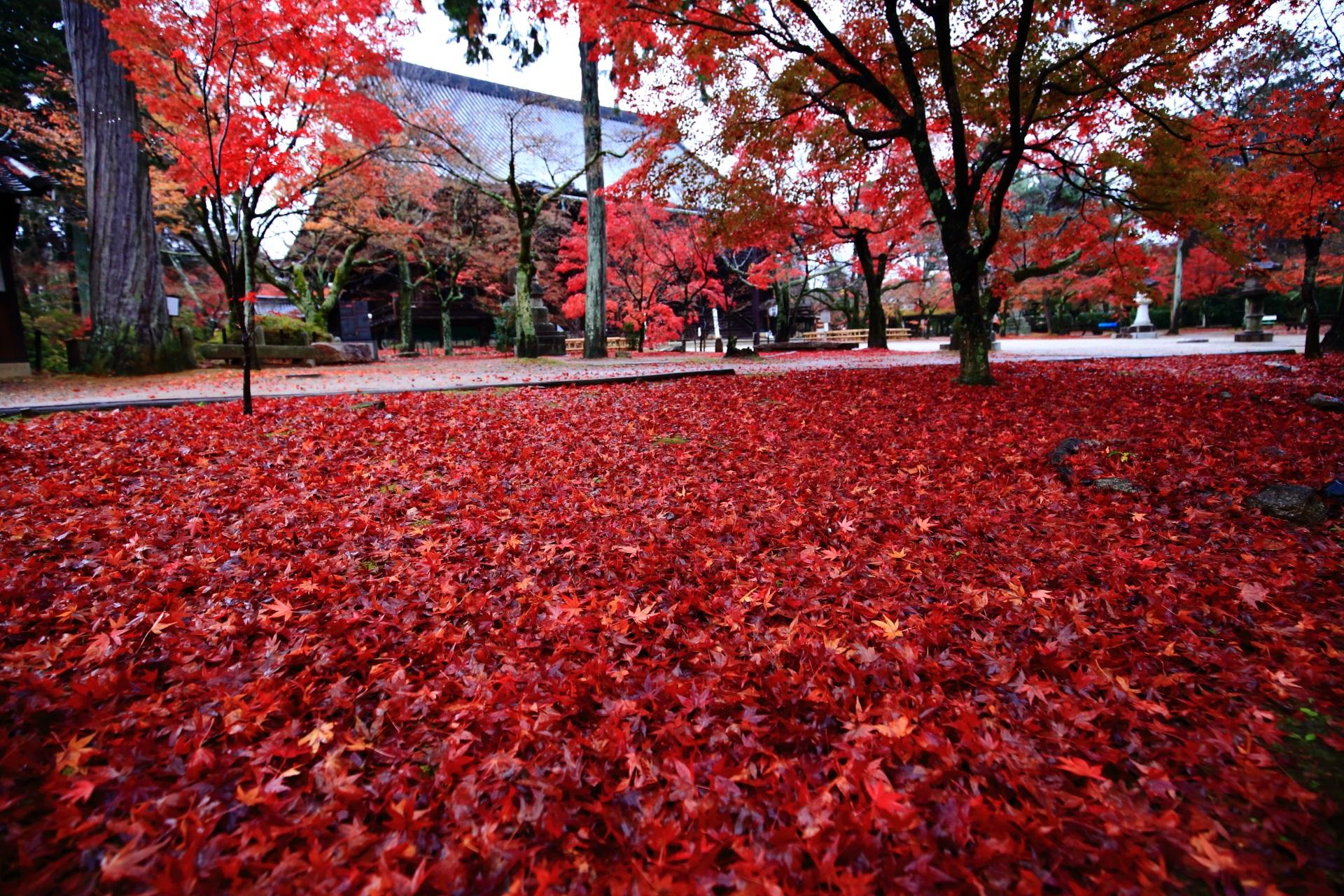 本堂前の息をのむ敷き紅葉