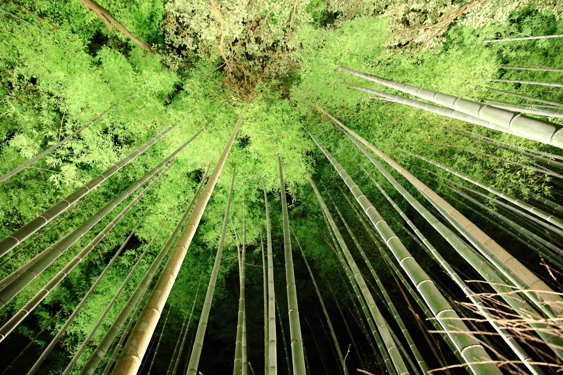 Kyoto Arashiyama-Hanatoro Bamboo forest Lightup
