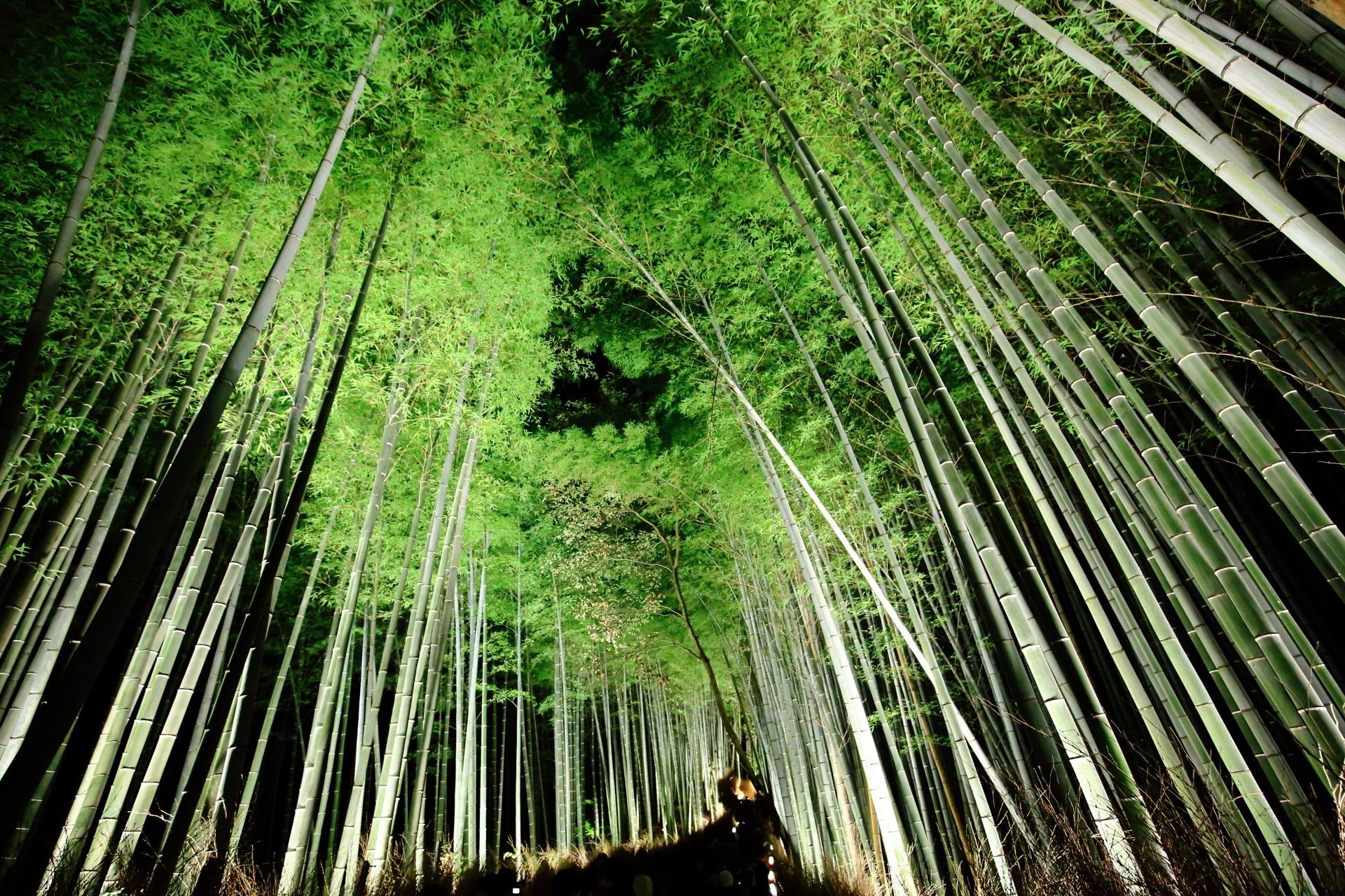 竹林の道 嵐山花灯路 ライトアップ 幻想的