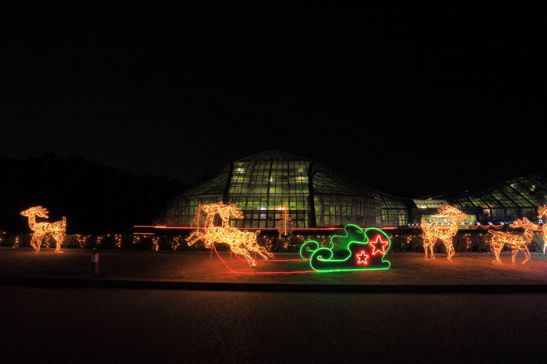 府立植物園のソリとトナカイのイルミネーション