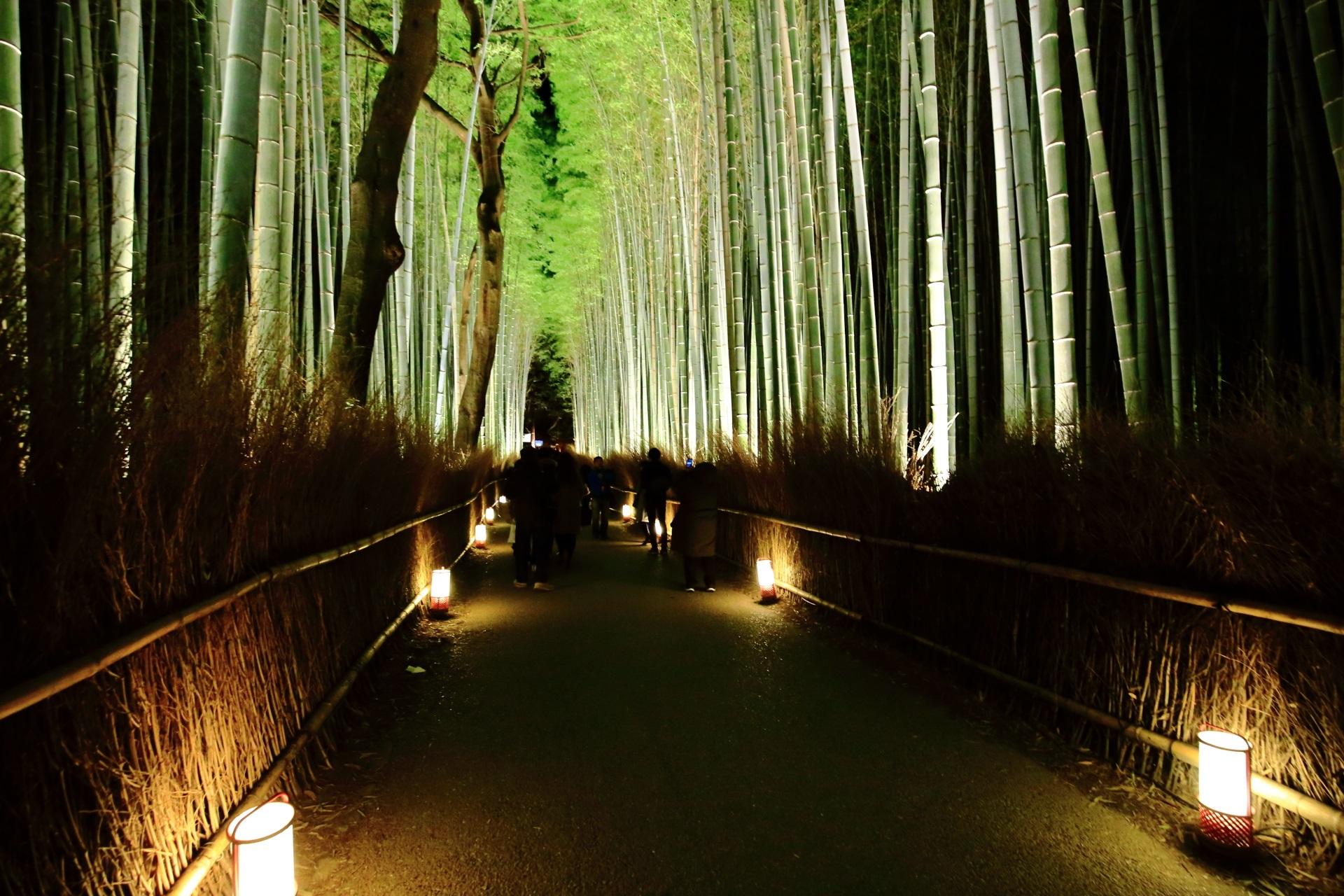 竹林の道 高画質 写真 嵐山花灯路 ライトアップ