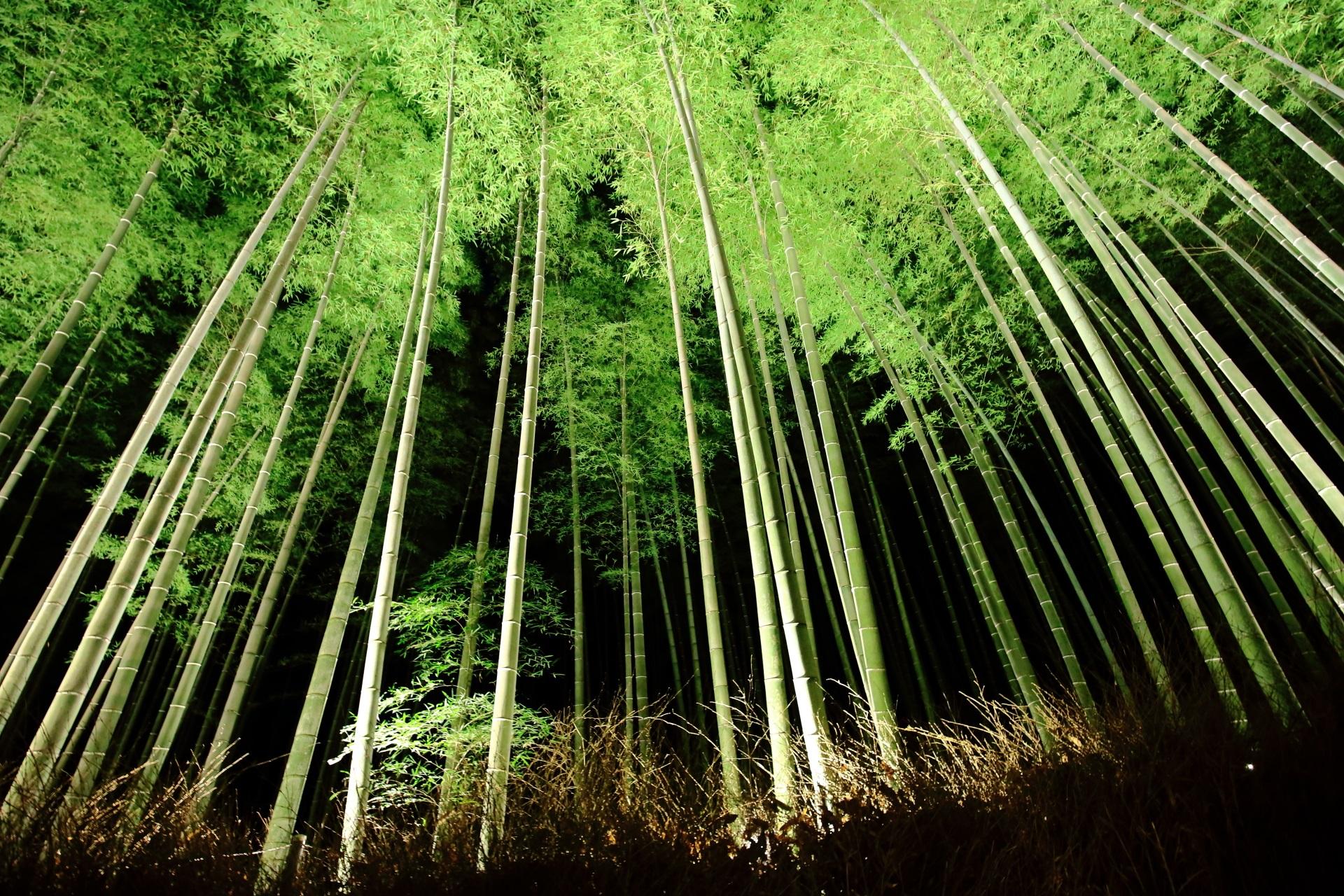 嵐山花灯路 高画質 竹林 写真 神秘的