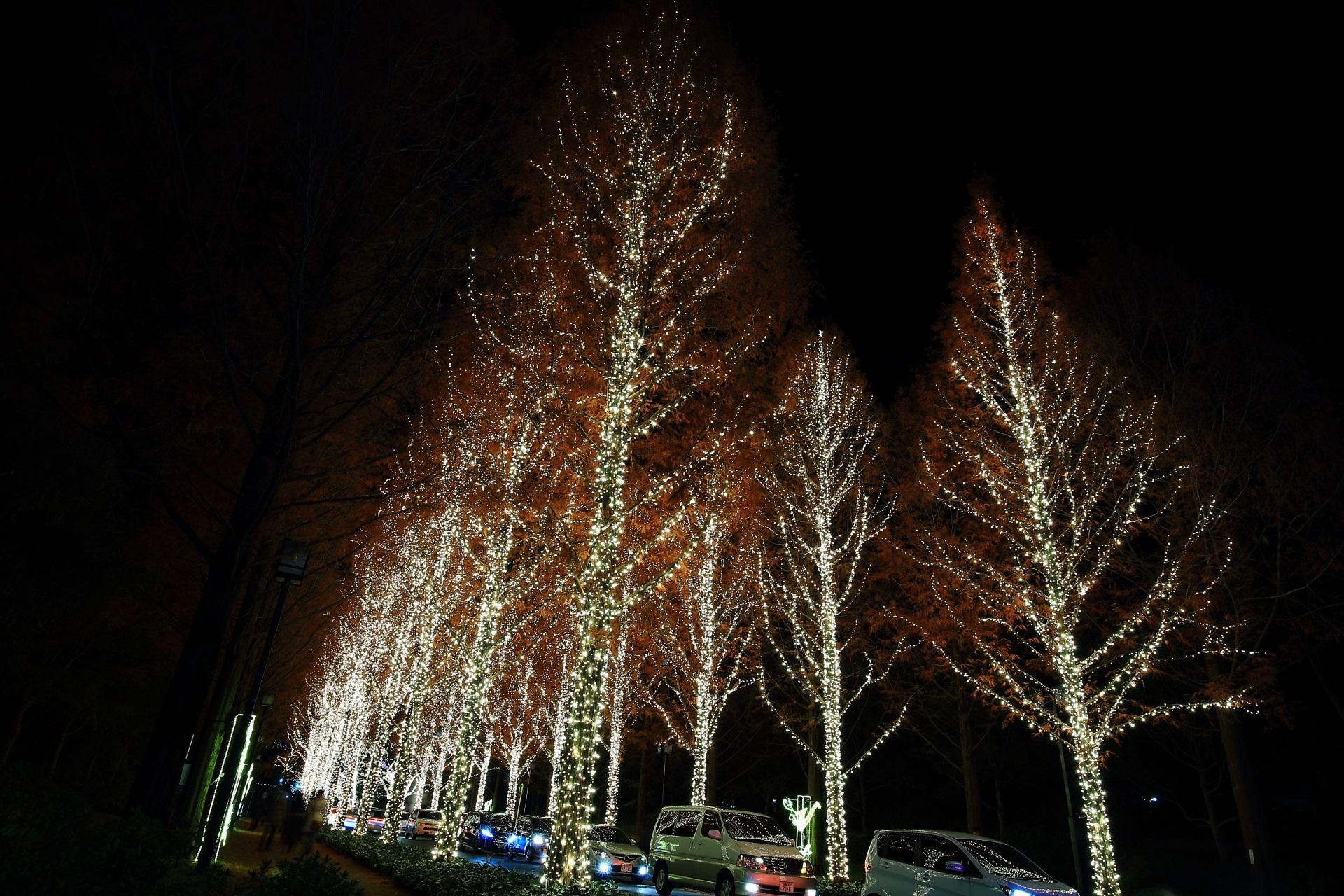 光のプロムナード ロームイルミネーション メタセコイア並木