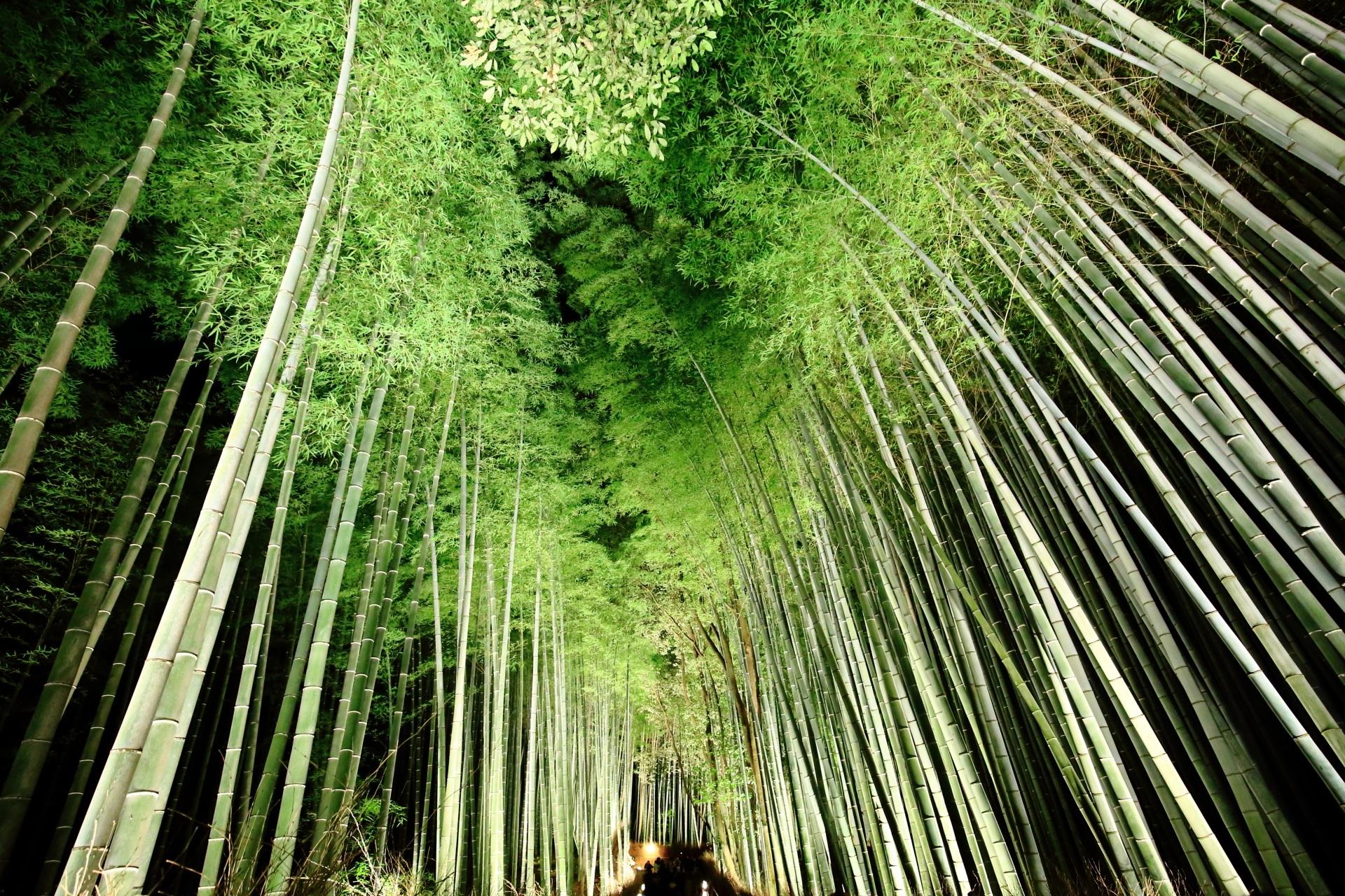 高画質 嵐山花灯路 竹林の道 写真 綺麗