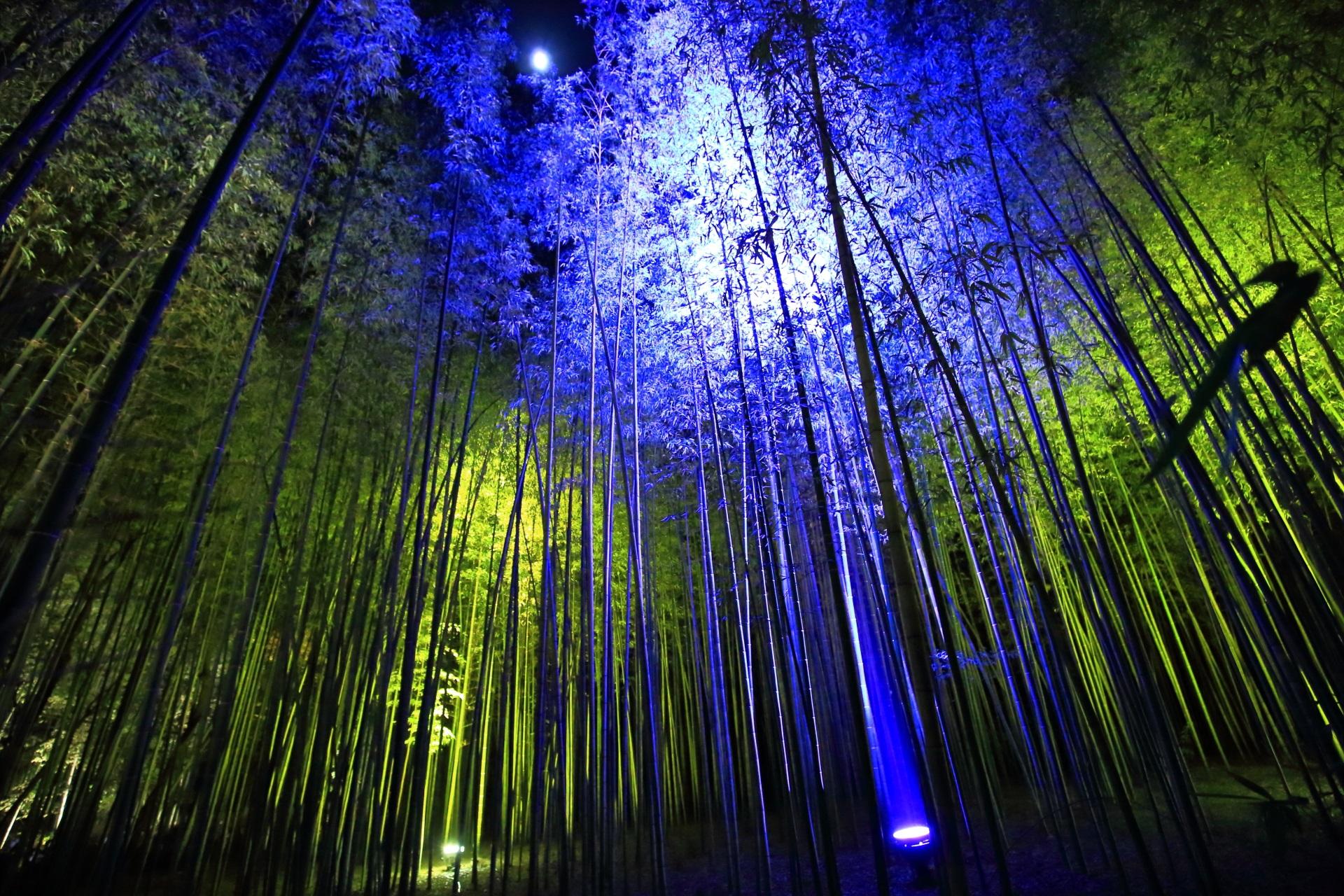 嵐山花灯路の竹林と月の神秘的なライトアップ