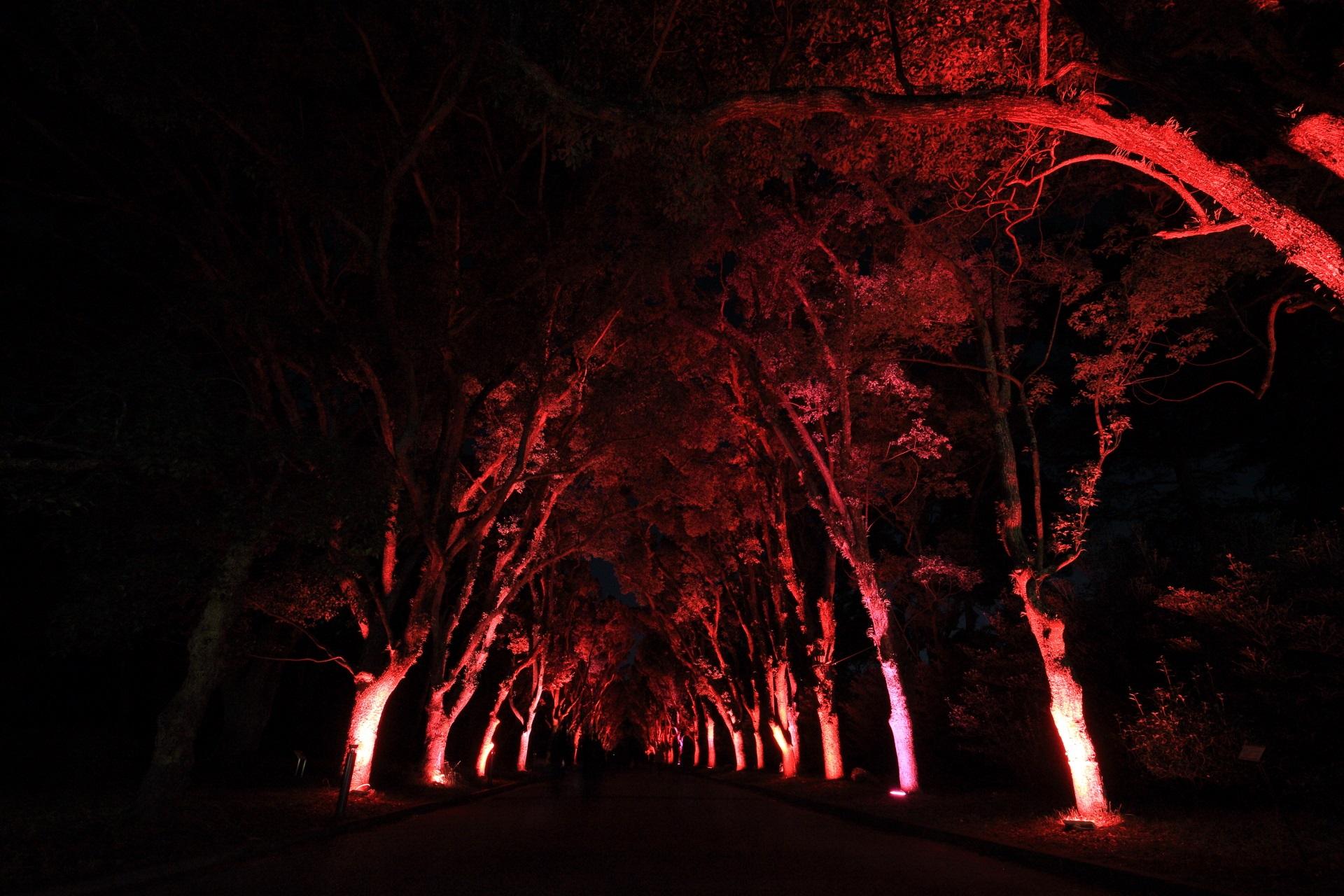 京都府立植物園のくすのき並木のクリスマスカラーのライトアップ
