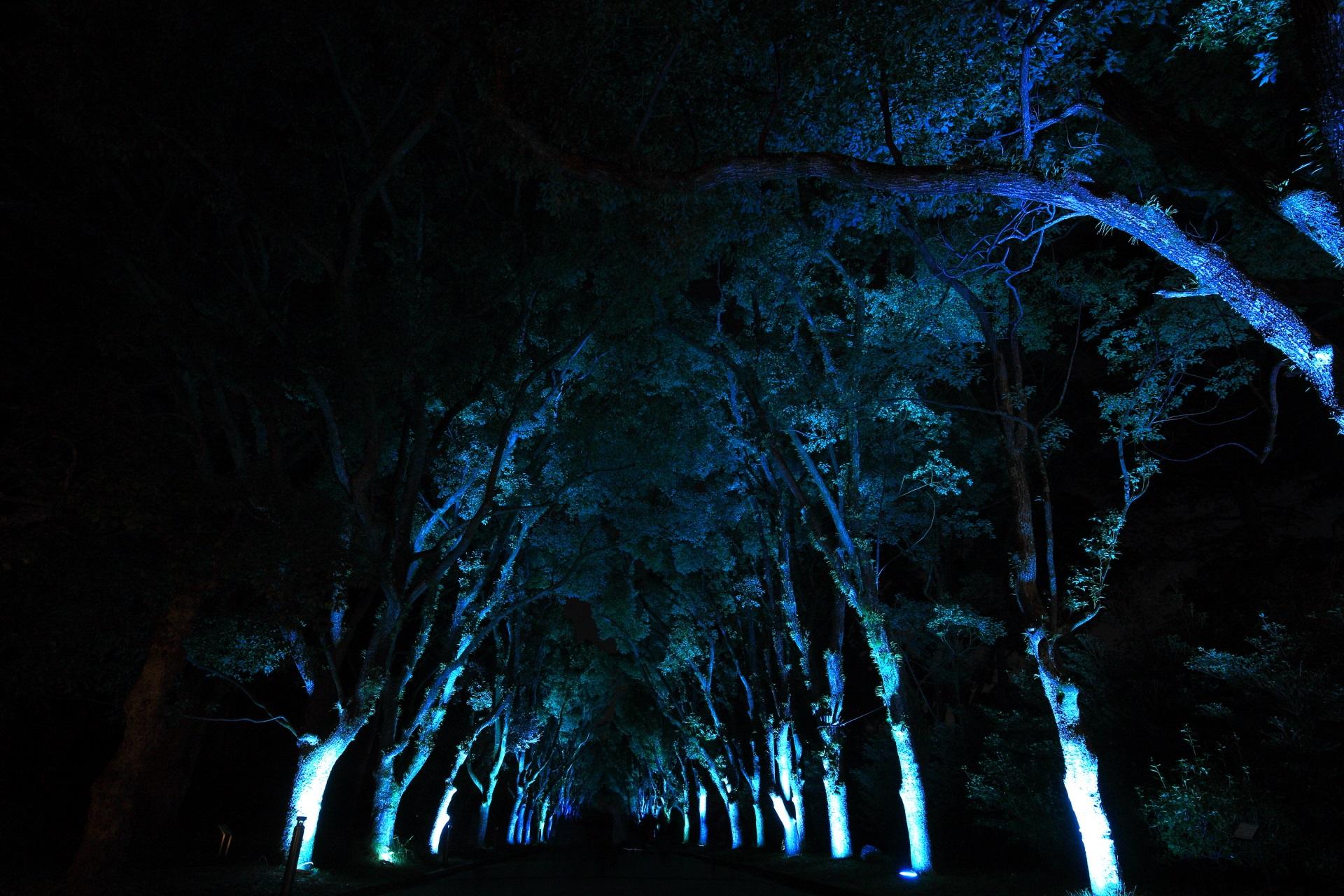 くすのき並木の幻想的なライトアップ