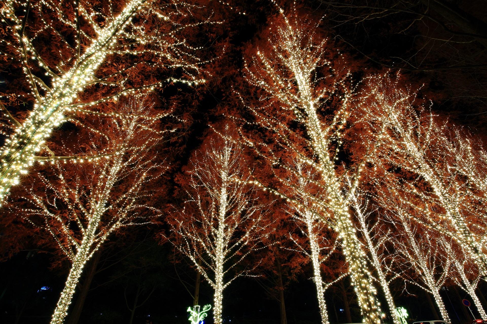 ロームイルミネーション 写真 高画質 メタセコイア並木