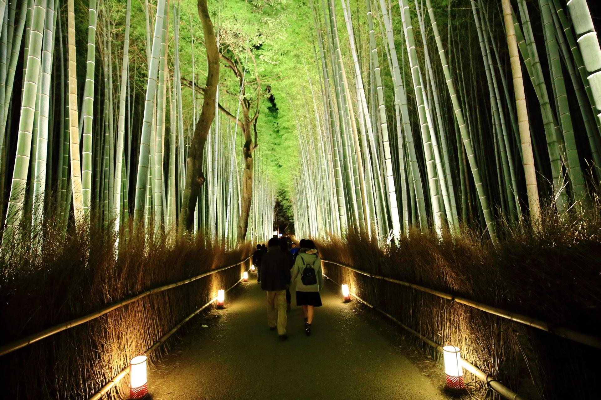 嵐山花灯路の綺麗な竹林の道のライトアップ