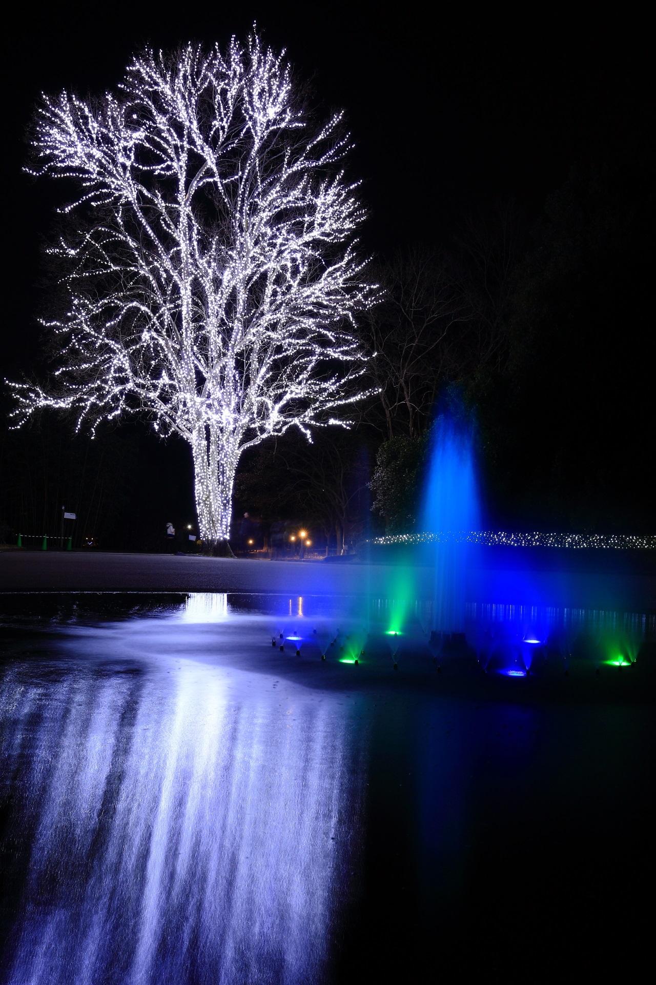 京都府立植物園の綺麗で楽しいイルミネーション