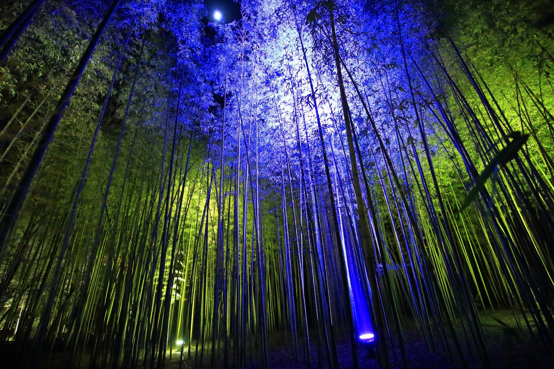 竹林の道 嵐山花灯路 京都の冬の神秘的なライトアップ