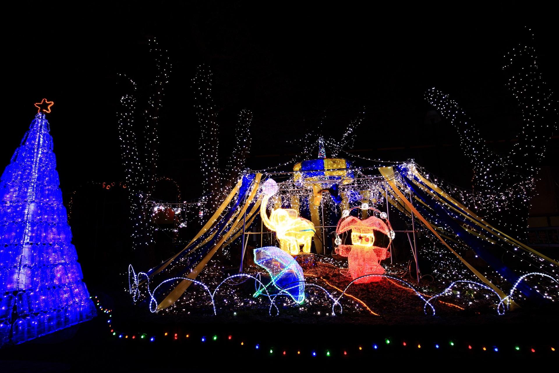 平安女学院 イルミネーション 綺麗 クリスマス