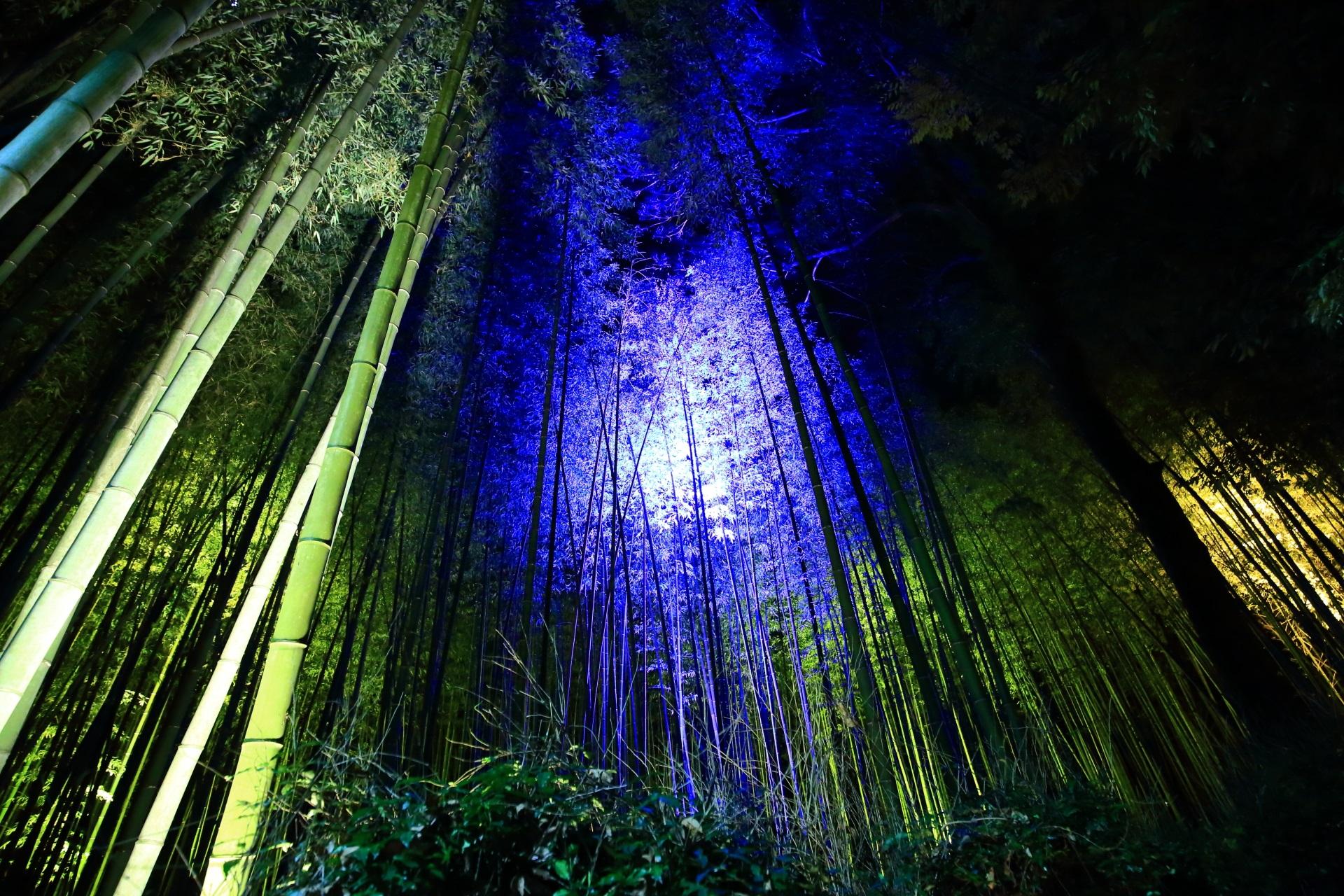 嵐山花灯路の竹林の青色の幻想的なライトアップ