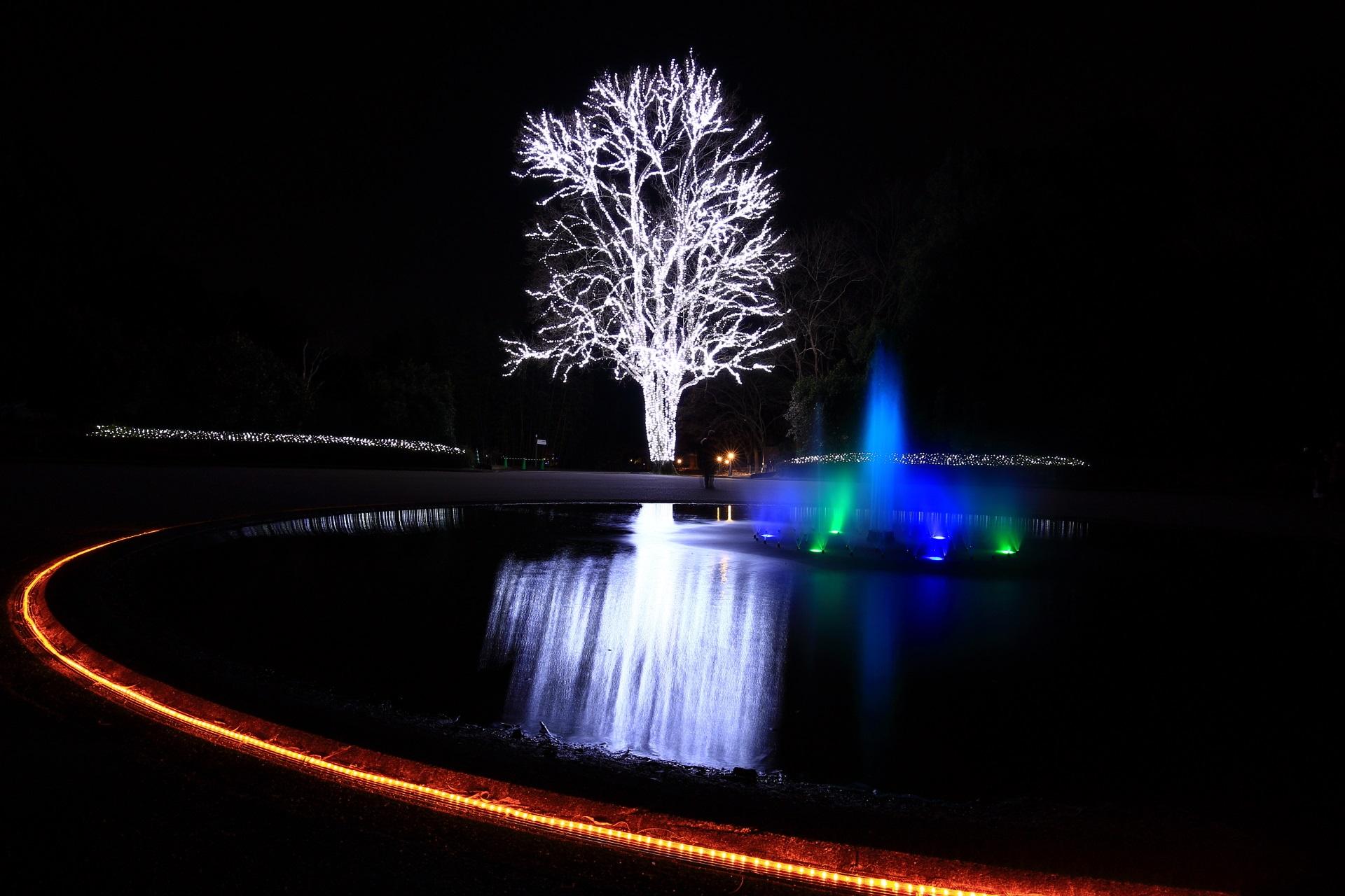 京都府立植物園 イルミネーション 楽しく幻想的な冬の輝き